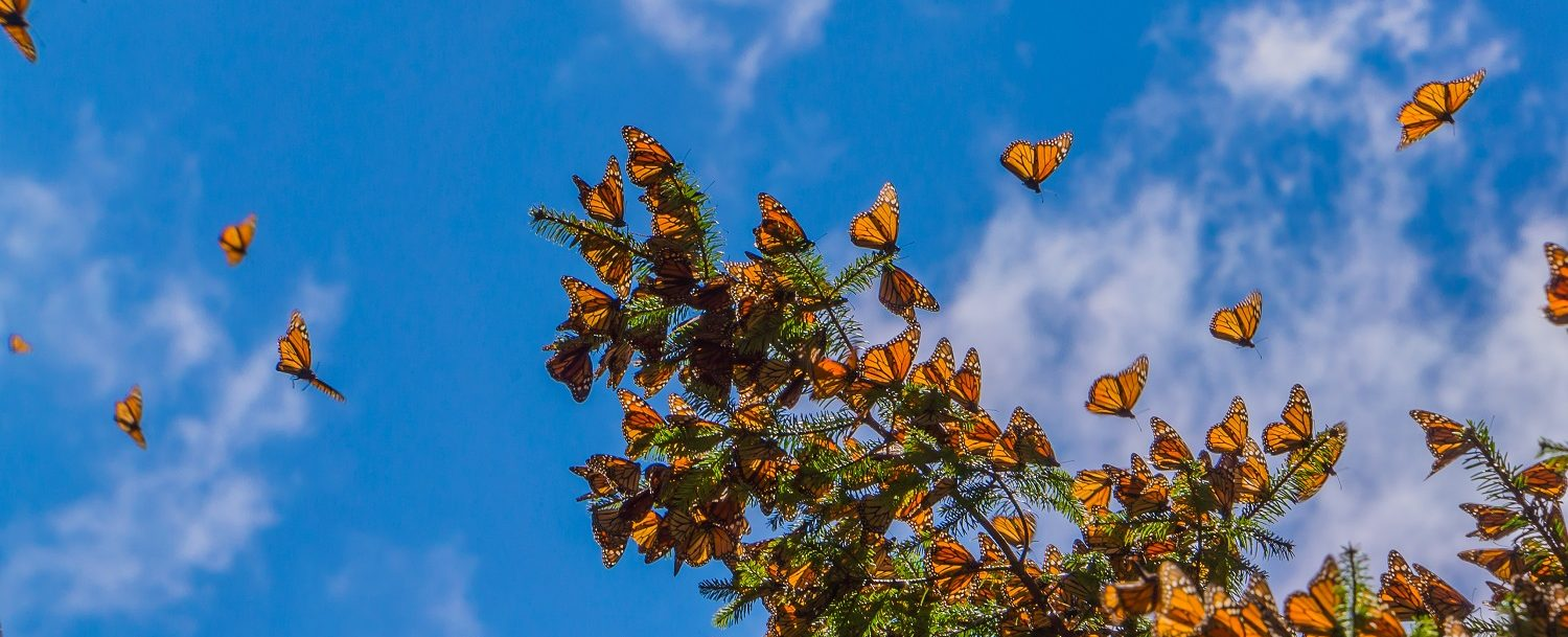Why You Need to Flutter Your Way to the Wimberley Butterfly Festival